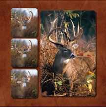 Pictures of Giant Whitetail Bucks