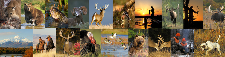 Wildlife Stock Photography